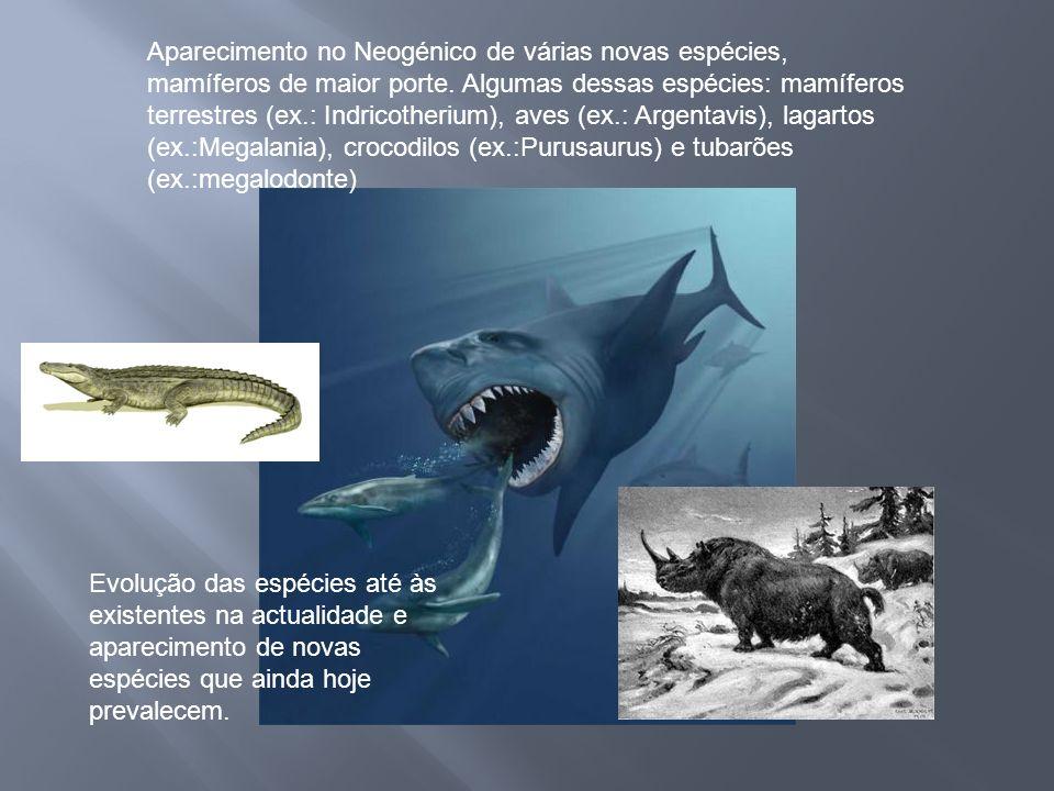 Aparecimento no Neogénico de várias novas espécies, mamíferos de maior porte. Algumas dessas espécies: mamíferos terrestres (ex.: Indricotherium), aves (ex.: Argentavis), lagartos (ex.:Megalania), crocodilos (ex.:Purusaurus) e tubarões (ex.:megalodonte)