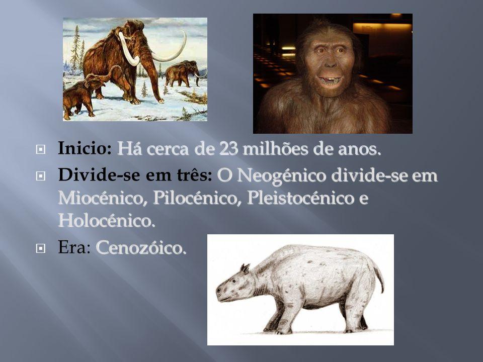 Inicio: Há cerca de 23 milhões de anos.