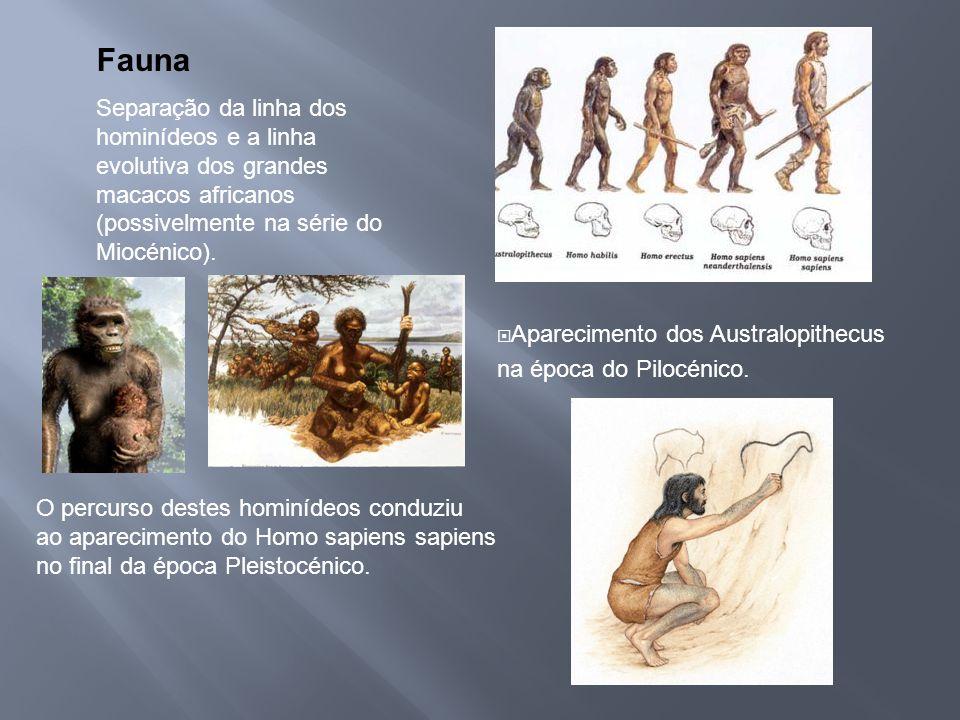 Fauna Separação da linha dos hominídeos e a linha evolutiva dos grandes macacos africanos (possivelmente na série do Miocénico).