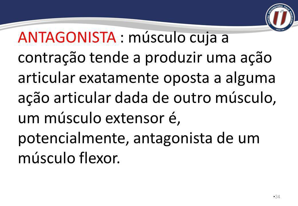 ANTAGONISTA : músculo cuja a contração tende a produzir uma ação articular exatamente oposta a alguma ação articular dada de outro músculo, um músculo extensor é, potencialmente, antagonista de um músculo flexor.