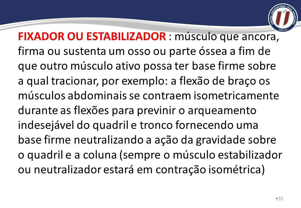 FIXADOR OU ESTABILIZADOR : músculo que ancora, firma ou sustenta um osso ou parte óssea a fim de que outro músculo ativo possa ter base firme sobre a qual tracionar, por exemplo: a flexão de braço os músculos abdominais se contraem isometricamente durante as flexões para previnir o arqueamento indesejável do quadril e tronco fornecendo uma base firme neutralizando a ação da gravidade sobre o quadril e a coluna (sempre o músculo estabilizador ou neutralizador estará em contração isométrica)