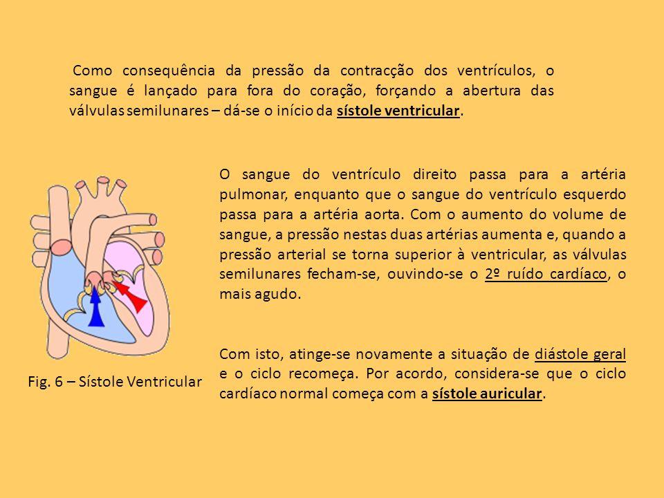Como consequência da pressão da contracção dos ventrículos, o sangue é lançado para fora do coração, forçando a abertura das válvulas semilunares – dá-se o início da sístole ventricular.