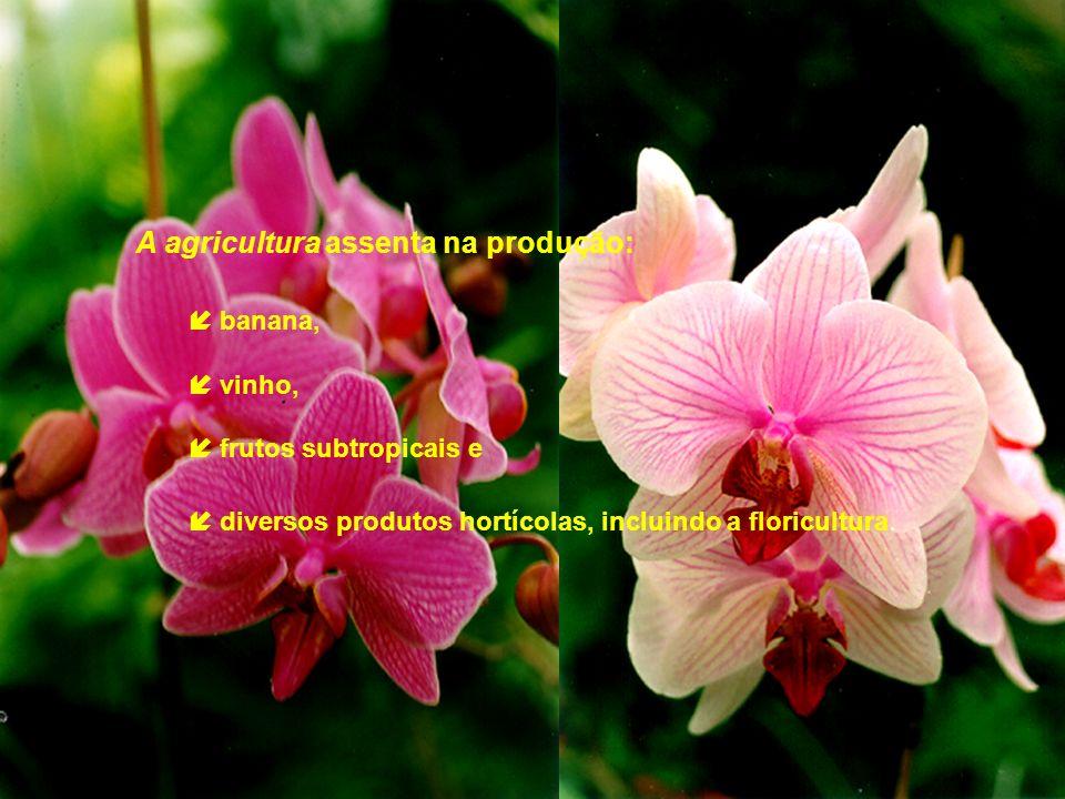 A agricultura assenta na produção: