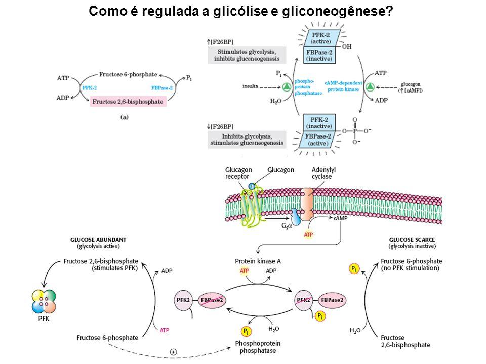 Como é regulada a glicólise e gliconeogênese