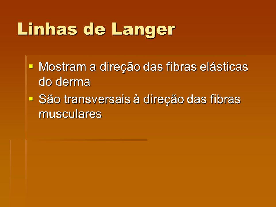 Linhas de Langer Mostram a direção das fibras elásticas do derma