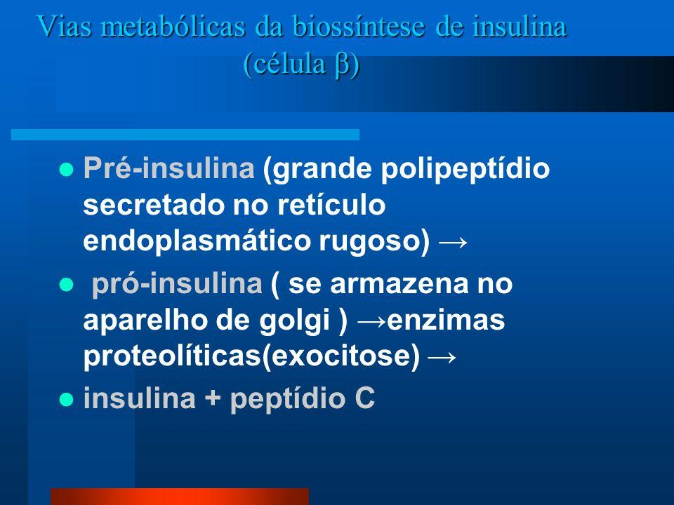 Vias metabólicas da biossíntese de insulina (célula β)