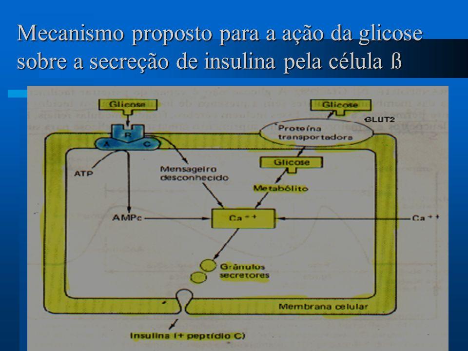 Mecanismo proposto para a ação da glicose sobre a secreção de insulina pela célula ß