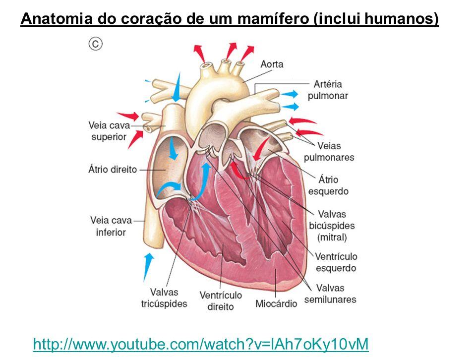 Perfecto Anatomía De Mamíferos Regalo - Imágenes de Anatomía Humana ...
