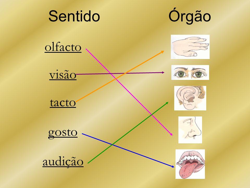 Sentido Órgão olfacto visão tacto gosto audição