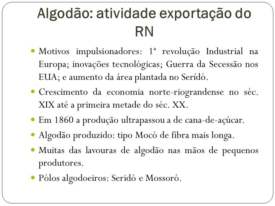 Algodão: atividade exportação do RN