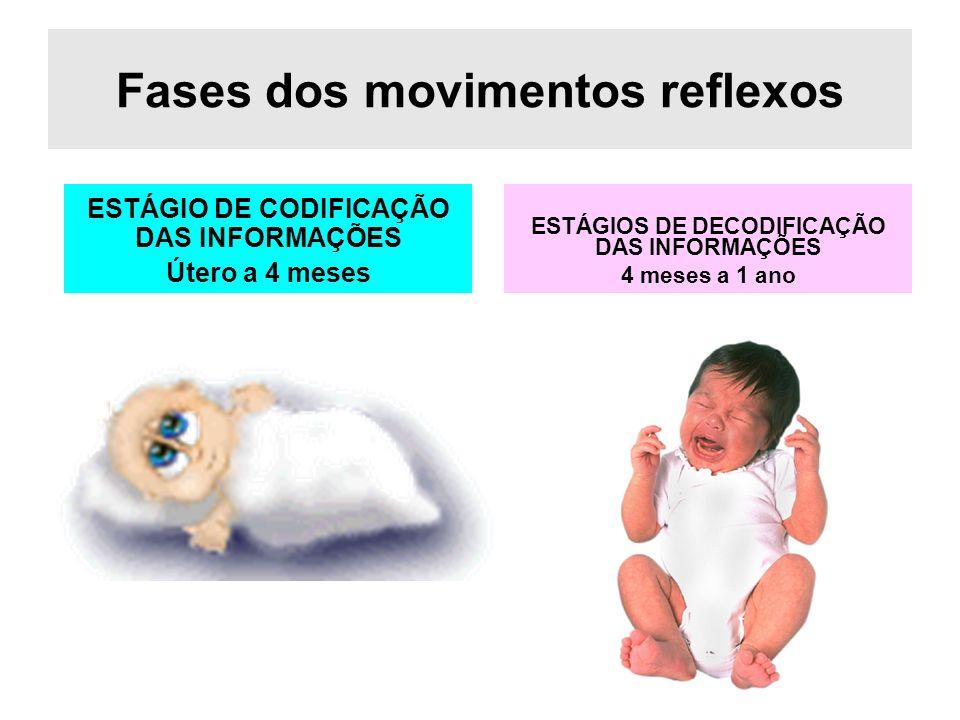 Fases dos movimentos reflexos