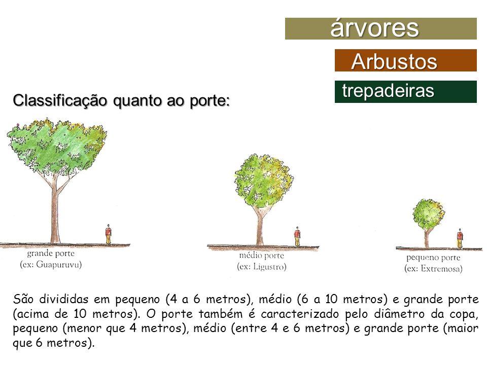 Morfologia vegetal rvores arbustos alison anderson ana - Especies de arbustos ...