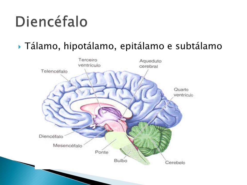 Asombroso Anatomía Cerebral Tálamo Patrón - Imágenes de Anatomía ...