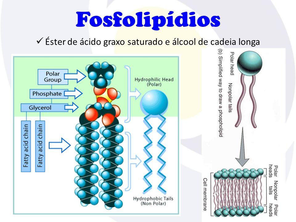 Éster de ácido graxo saturado e álcool de cadeia longa