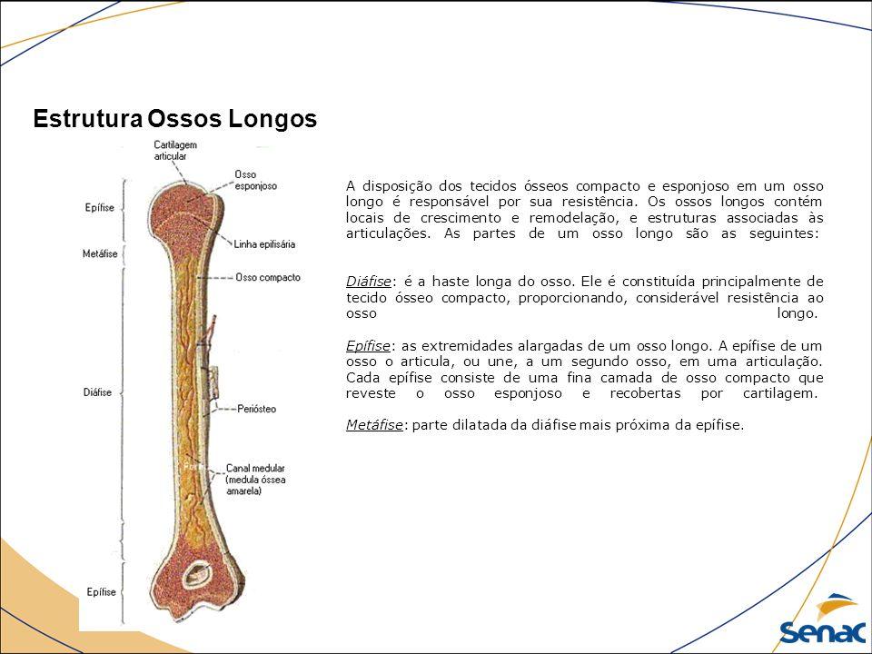 Anatomia introdu o ppt video online carregar for O osso esterno e dividido em