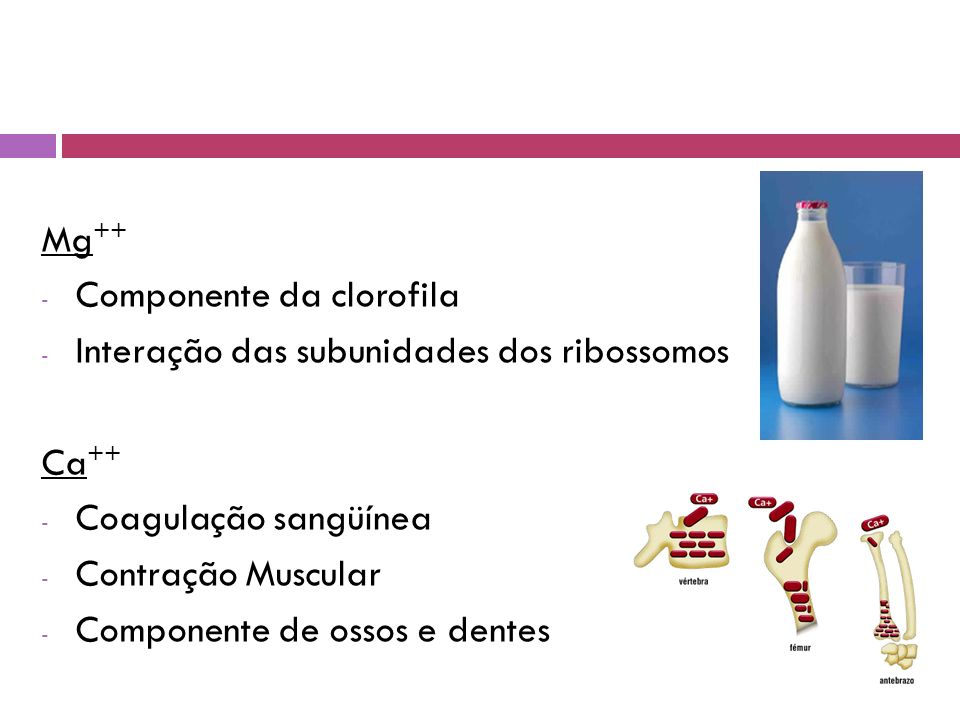 Mg++ Componente da clorofila. Interação das subunidades dos ribossomos. Ca++ Coagulação sangüínea.