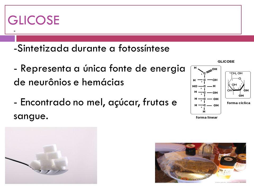 GLICOSE Sintetizada durante a fotossíntese