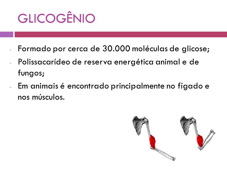 GLICOGÊNIO Formado por cerca de 30.000 moléculas de glicose;