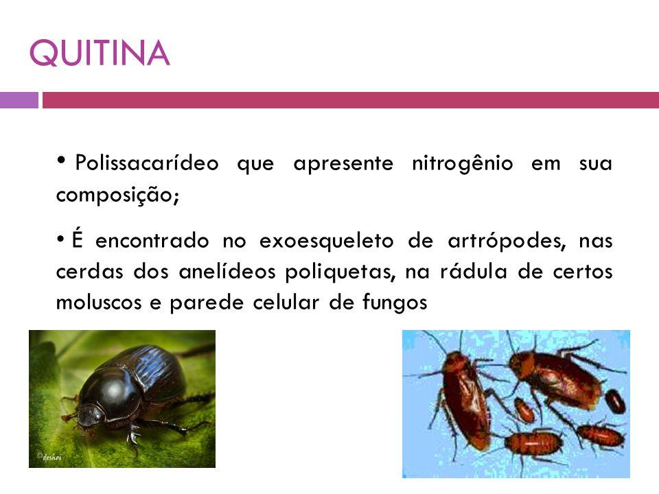 QUITINA Polissacarídeo que apresente nitrogênio em sua composição;