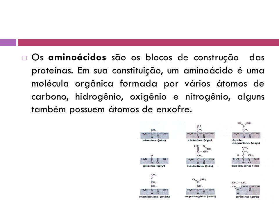 Os aminoácidos são os blocos de construção das proteínas