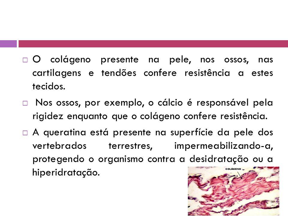 O colágeno presente na pele, nos ossos, nas cartilagens e tendões confere resistência a estes tecidos.