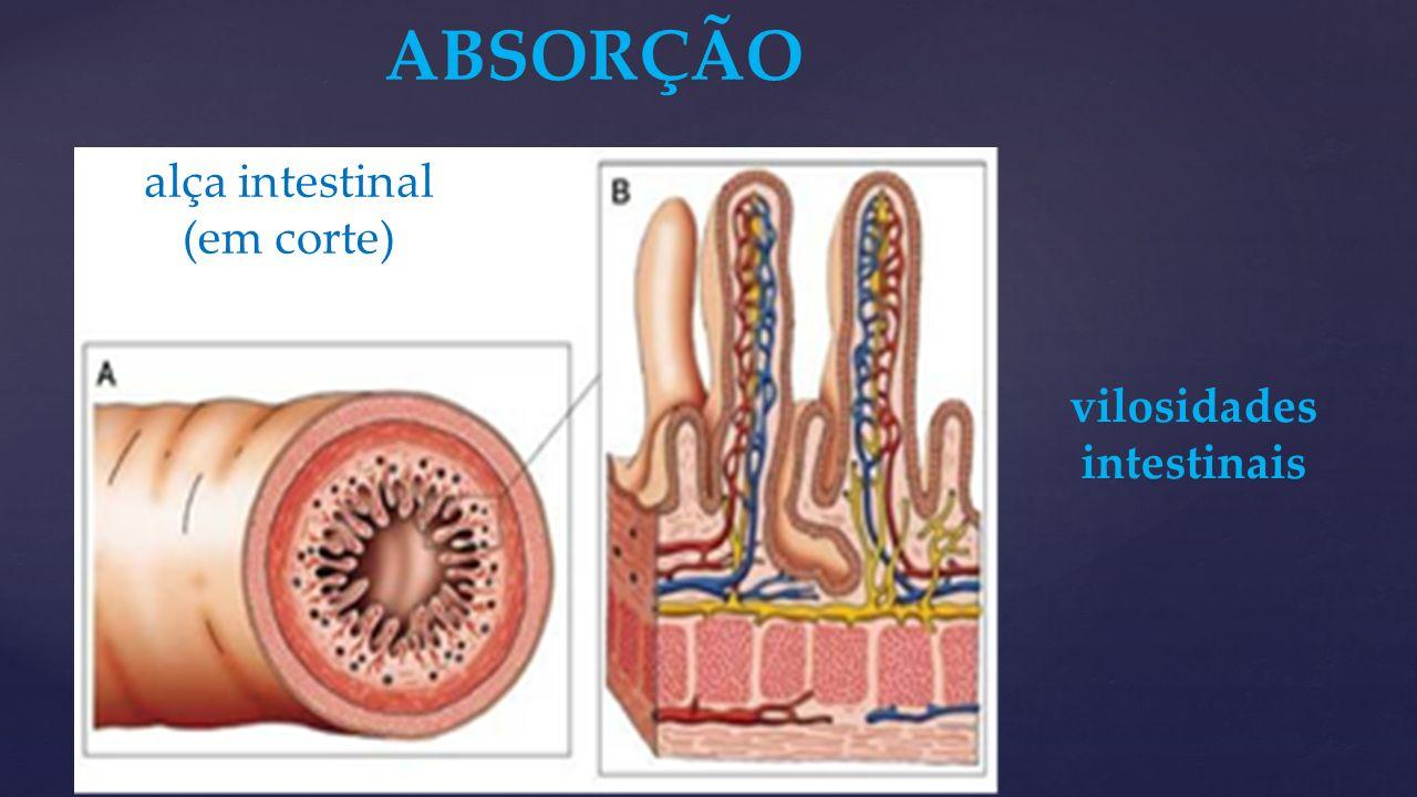 vilosidades intestinais