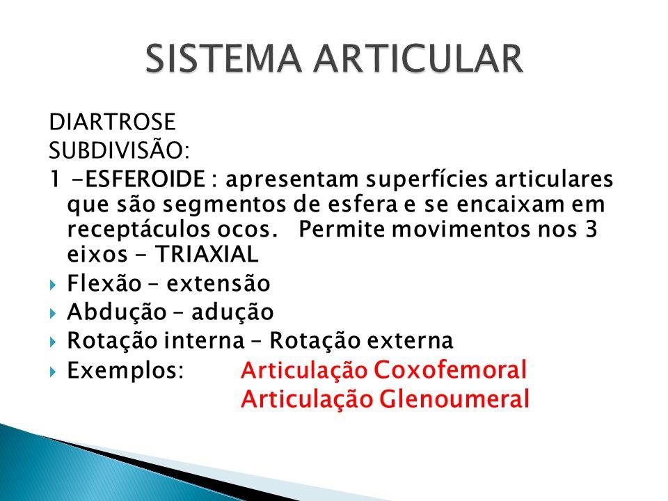 SISTEMA ARTICULAR Articulação Glenoumeral DIARTROSE SUBDIVISÃO: