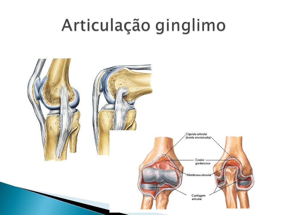 Articulação ginglimo