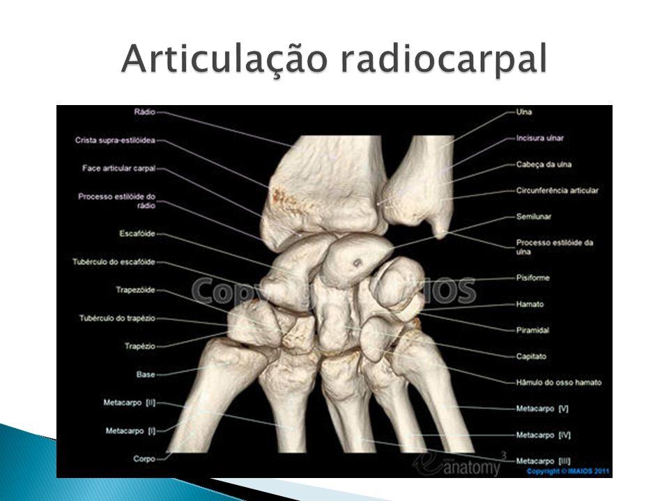 Articulação radiocarpal