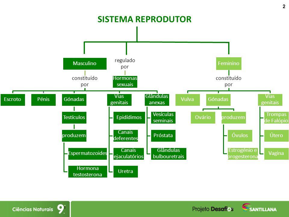 O sistema reprodutor Esquema e ideias-chave - ppt carregar