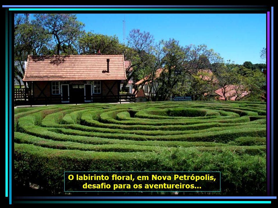 O labirinto floral, em Nova Petrópolis, desafio para os aventureiros…