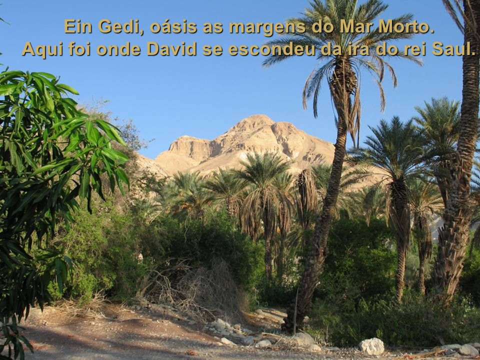 Ein Gedi, oásis as margens do Mar Morto.