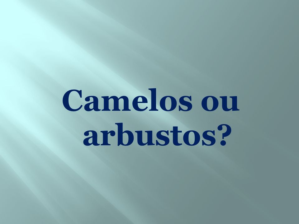 Camelos ou arbustos