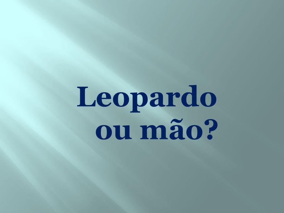 Leopardo ou mão