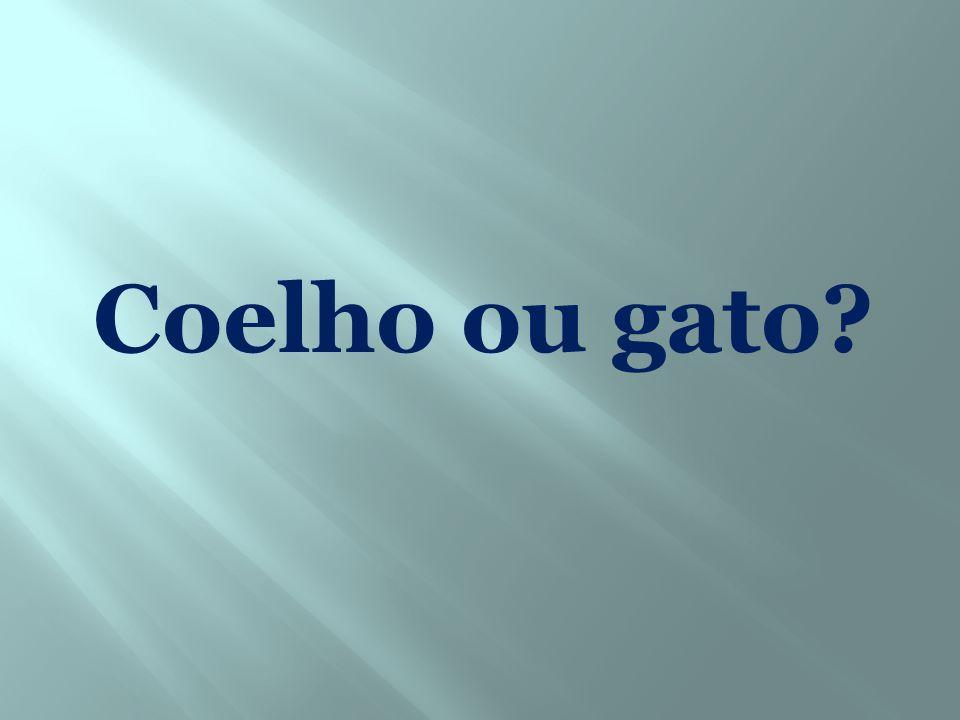 Coelho ou gato