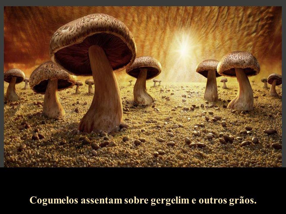 Cogumelos assentam sobre gergelim e outros grãos.