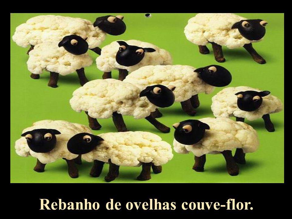 Rebanho de ovelhas couve-flor.