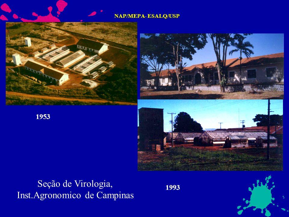 Seção de Virologia, Inst.Agronomico de Campinas