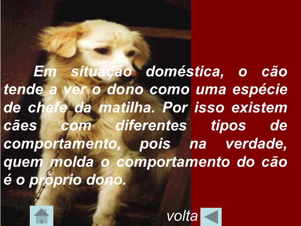 Em situação doméstica, o cão tende a ver o dono como uma espécie de chefe da matilha. Por isso existem cães com diferentes tipos de comportamento, pois na verdade, quem molda o comportamento do cão é o próprio dono.