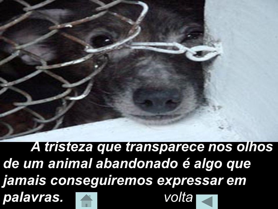 A tristeza que transparece nos olhos de um animal abandonado é algo que jamais conseguiremos expressar em palavras.