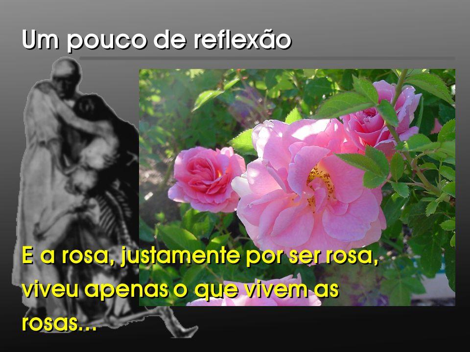 Um pouco de reflexão E a rosa, justamente por ser rosa, viveu apenas o que vivem as rosas...