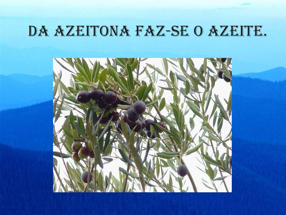 Da azeitona faz-se o azeite.