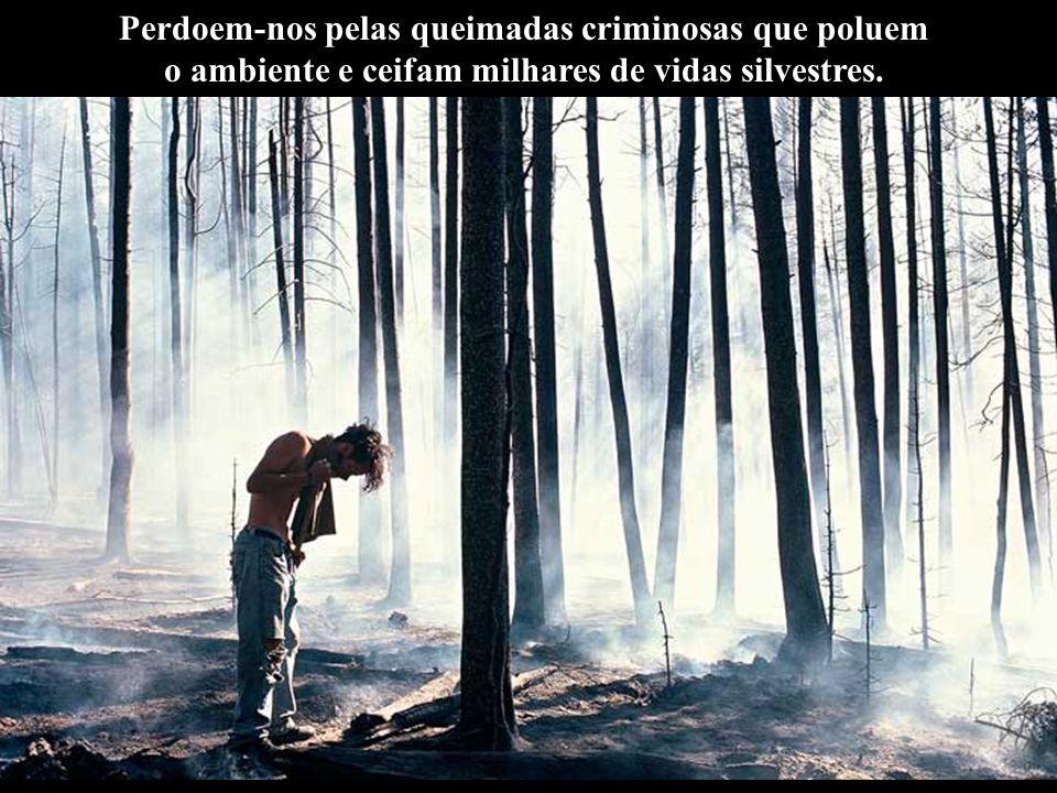 Perdoem-nos pelas queimadas criminosas que poluem o ambiente e ceifam milhares de vidas silvestres.