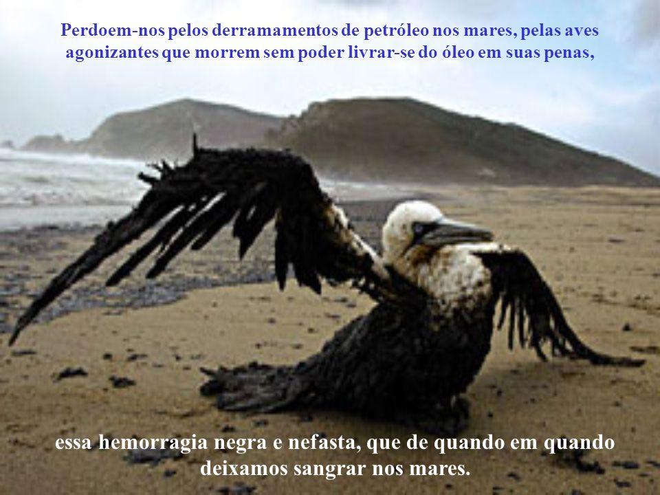 Perdoem-nos pelos derramamentos de petróleo nos mares, pelas aves agonizantes que morrem sem poder livrar-se do óleo em suas penas,