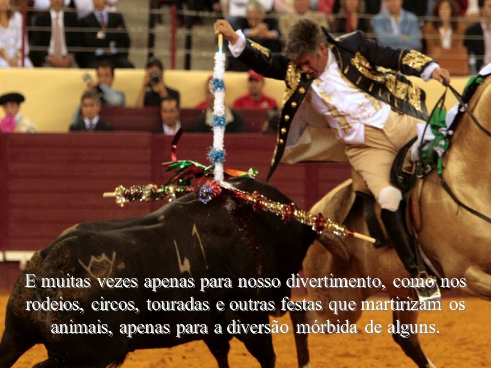 E muitas vezes apenas para nosso divertimento, como nos rodeios, circos, touradas e outras festas que martirizam os animais, apenas para a diversão mórbida de alguns.