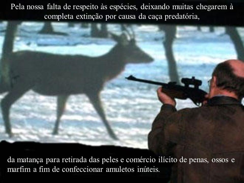 Pela nossa falta de respeito às espécies, deixando muitas chegarem à completa extinção por causa da caça predatória,