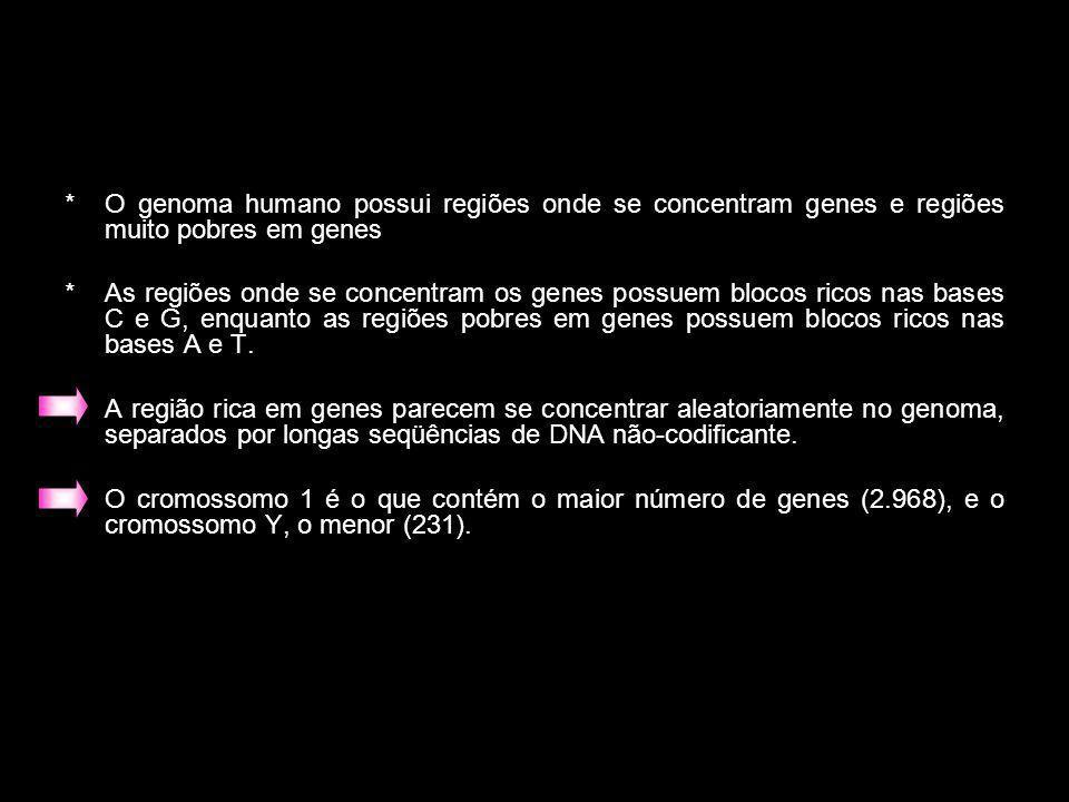 O genoma humano possui regiões onde se concentram genes e regiões muito pobres em genes