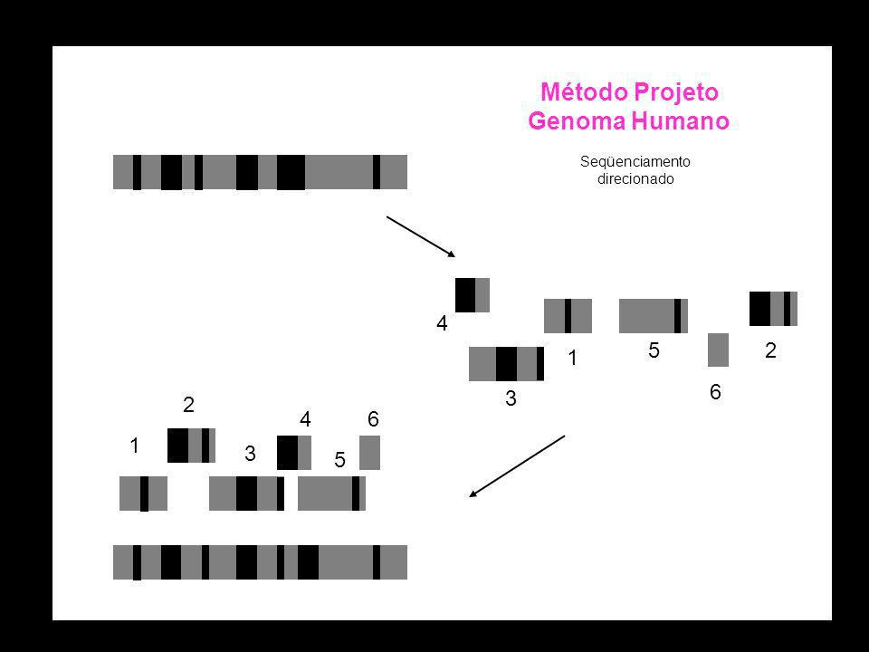 Método Projeto Genoma Humano