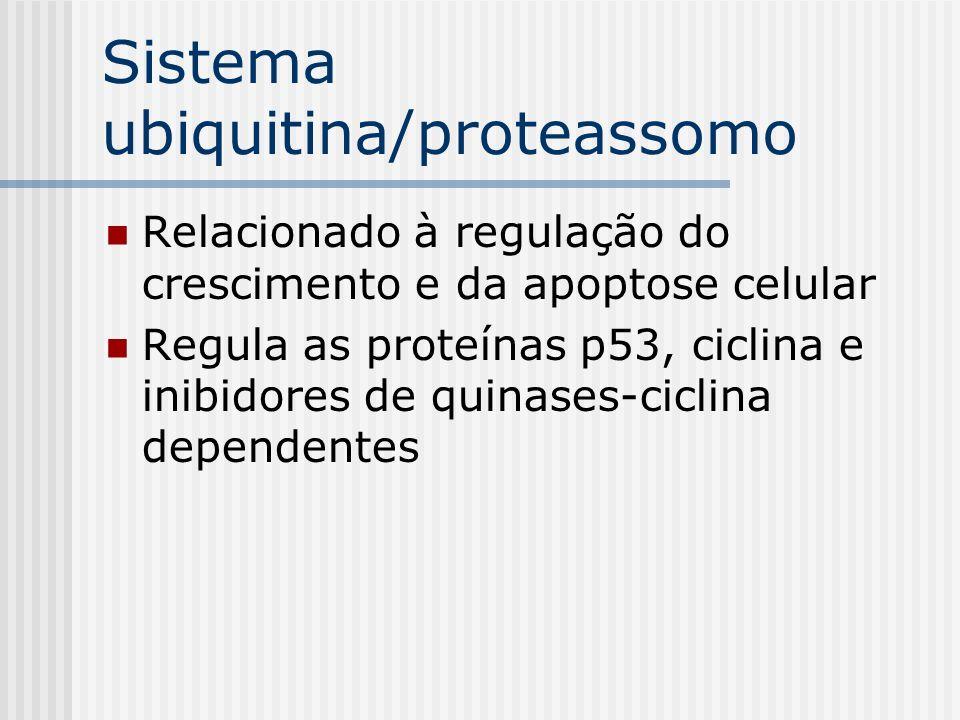 Sistema ubiquitina/proteassomo
