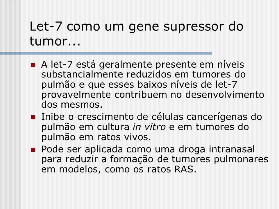 Let-7 como um gene supressor do tumor...